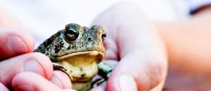 earthday_frog
